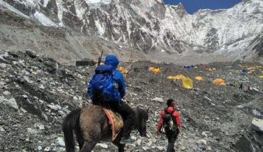 Author Archives Everest ER